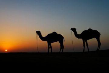 Capodanno Deserto