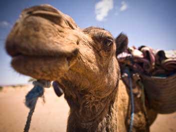 morocco-trek